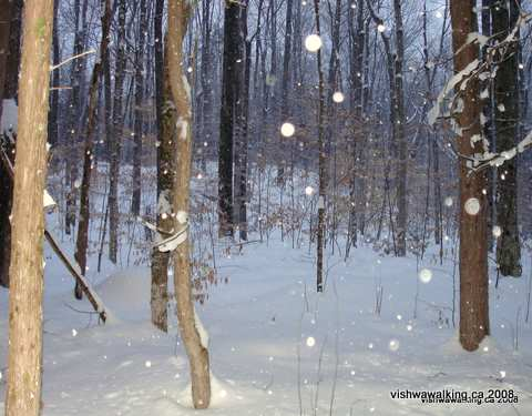 Vanderwater park, woods shot, evening, snowing, nature trail