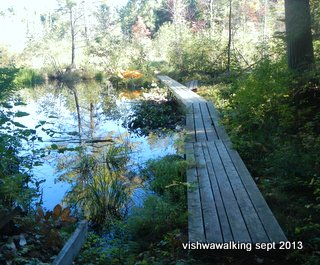 Algonquin: first bordwalk on Berm Lake loop